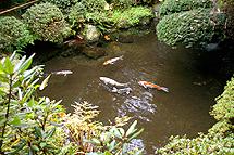 池の循環が必要